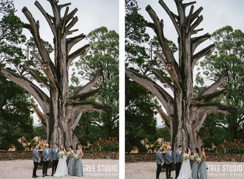 Big tree (1)